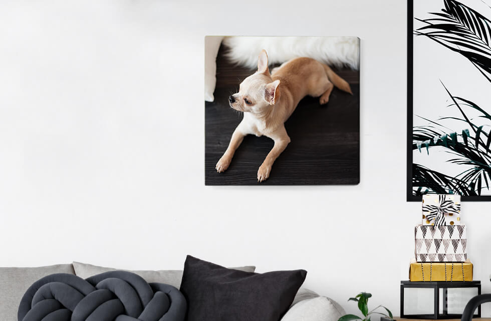 Photo Canvas Prints And Home Decor
